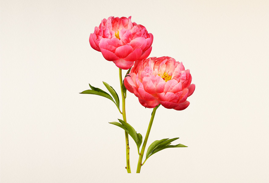 Kenji toma the most beautiful kenji toma the most beautiful flowers voltagebd Image collections